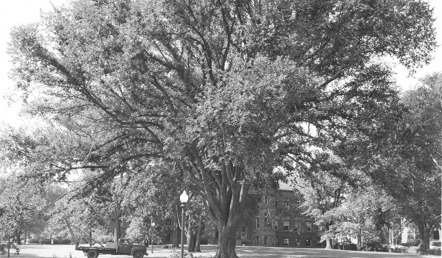 Tree-take-2-0000038
